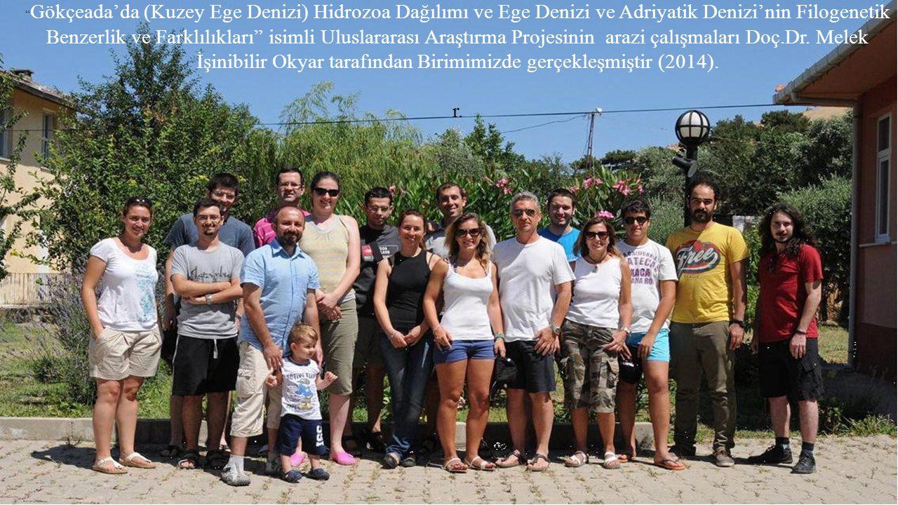 """"""" Gökçeada'da (Kuzey Ege Denizi) Hidrozoa Dağılımı ve Ege Denizi ve Adriyatik Denizi'nin Filogenetik Benzerlik ve Farklılıkları"""" isimli Uluslararası A"""