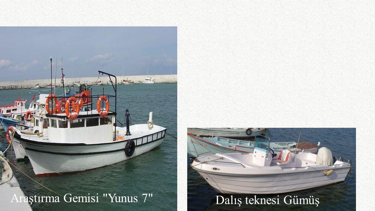 Araştırma Gemisi