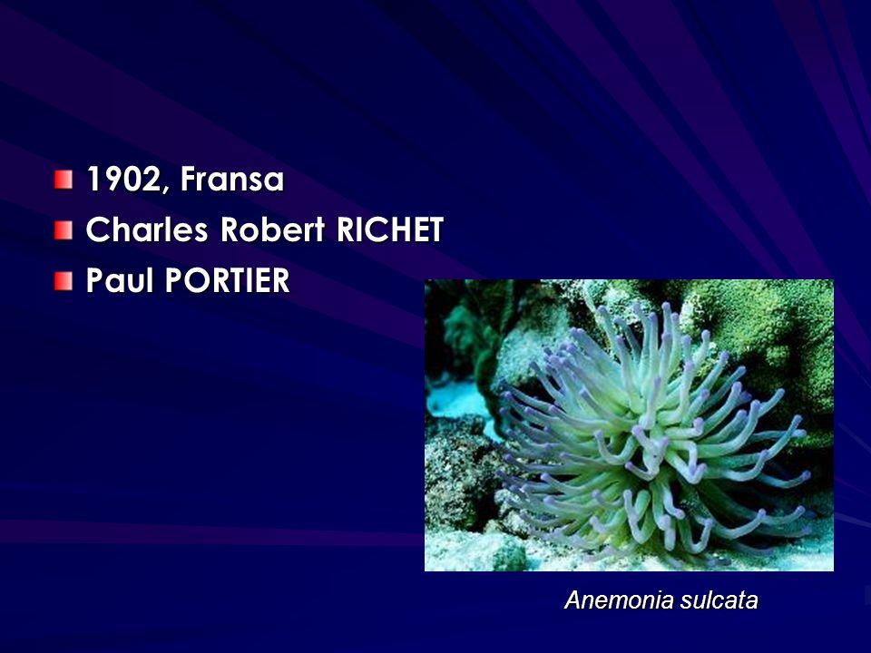 1902, Fransa Charles Robert RICHET Paul PORTIER Anemonia sulcata