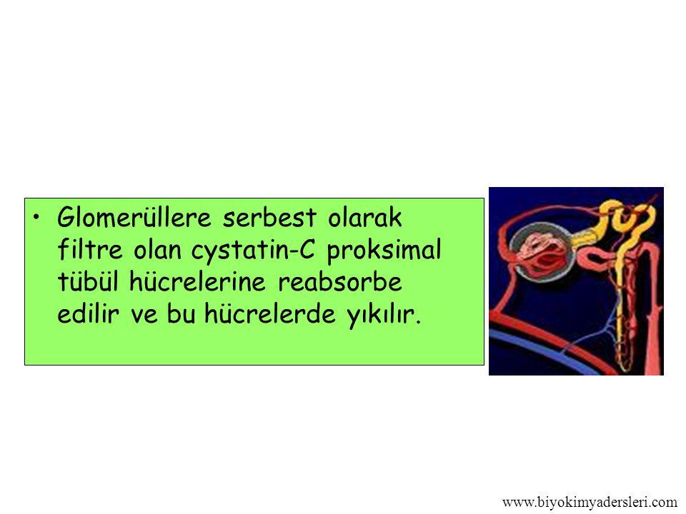 www.biyokimyadersleri.com Glomerüllere serbest olarak filtre olan cystatin-C proksimal tübül hücrelerine reabsorbe edilir ve bu hücrelerde yıkılır.
