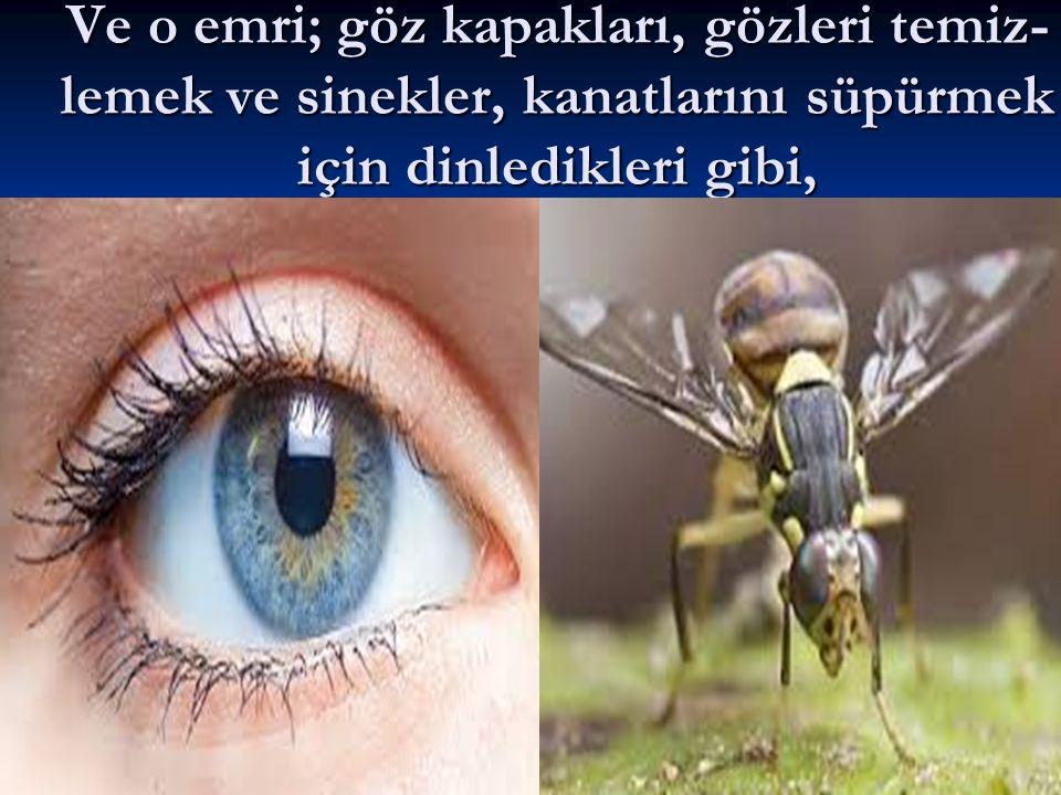 Ve o emri; göz kapakları, gözleri temiz- lemek ve sinekler, kanatlarını süpürmek için dinledikleri gibi,