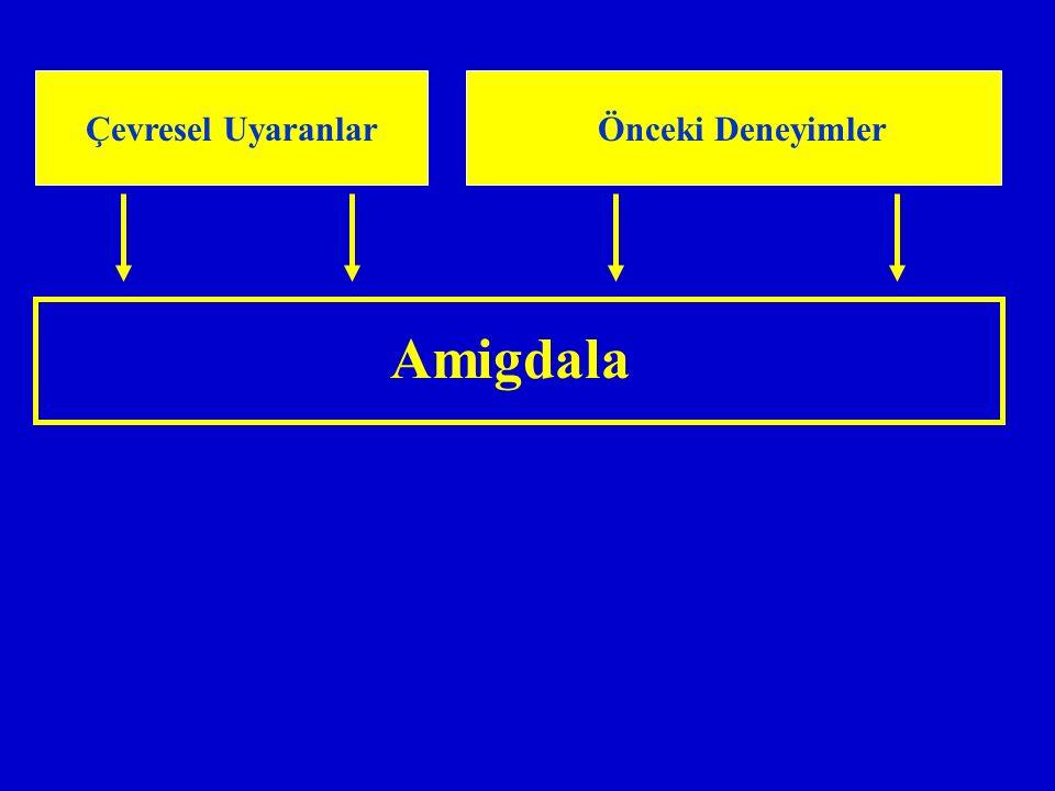 Amigdala Çevresel Uyaranlar Önceki Deneyimler