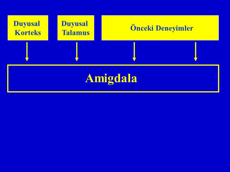 Amigdala Duyusal Korteks Duyusal Talamus Medial Prefrontal Korteks Hipokampus Önceki Deneyimler