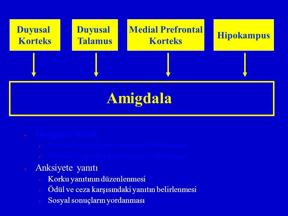 Amigdala Duyusal Korteks Duyusal Talamus Medial Prefrontal Korteks Hipokampus Duygusal bellek Duyusal uyaranların öneminin belirlenmesi Olaylara özgü
