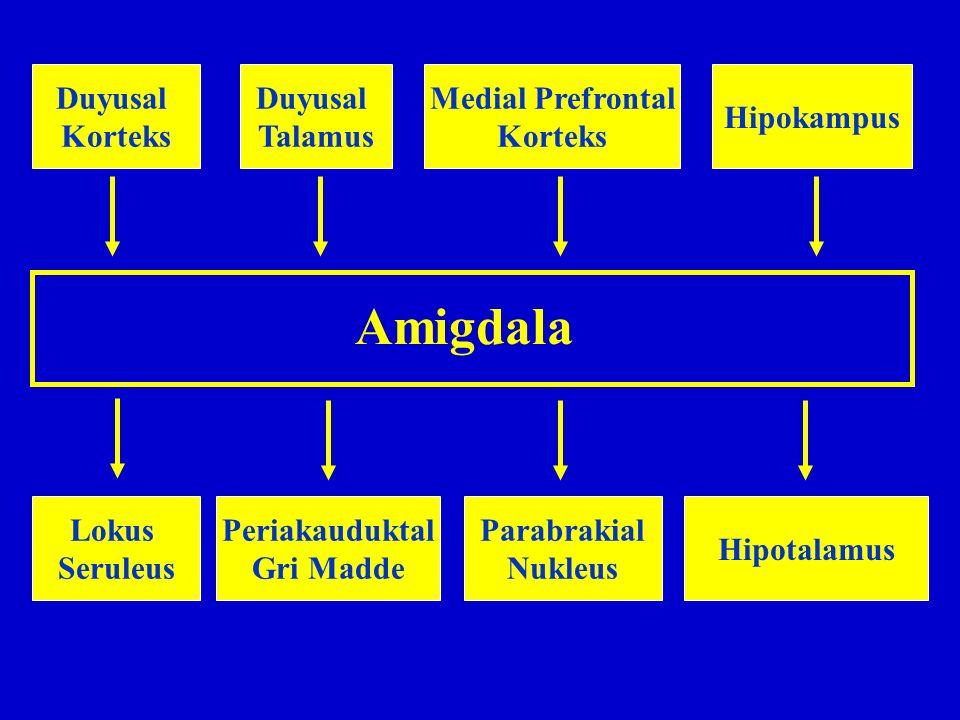 Amigdala Duyusal Korteks Duyusal Talamus Medial Prefrontal Korteks Hipokampus Lokus Seruleus Periakauduktal Gri Madde Parabrakial Nukleus Hipotalamus