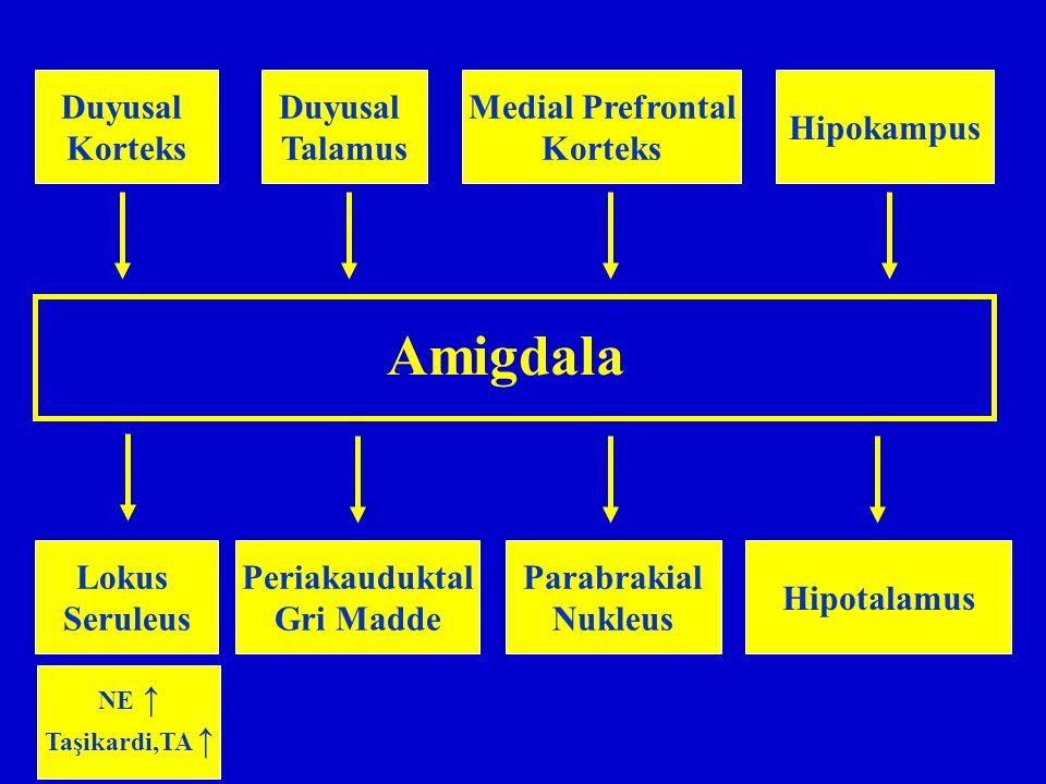 Amigdala Duyusal Korteks Duyusal Talamus Medial Prefrontal Korteks Hipokampus Lokus Seruleus Periakauduktal Gri Madde NE ↑ Taşikardi,TA ↑ Parabrakial