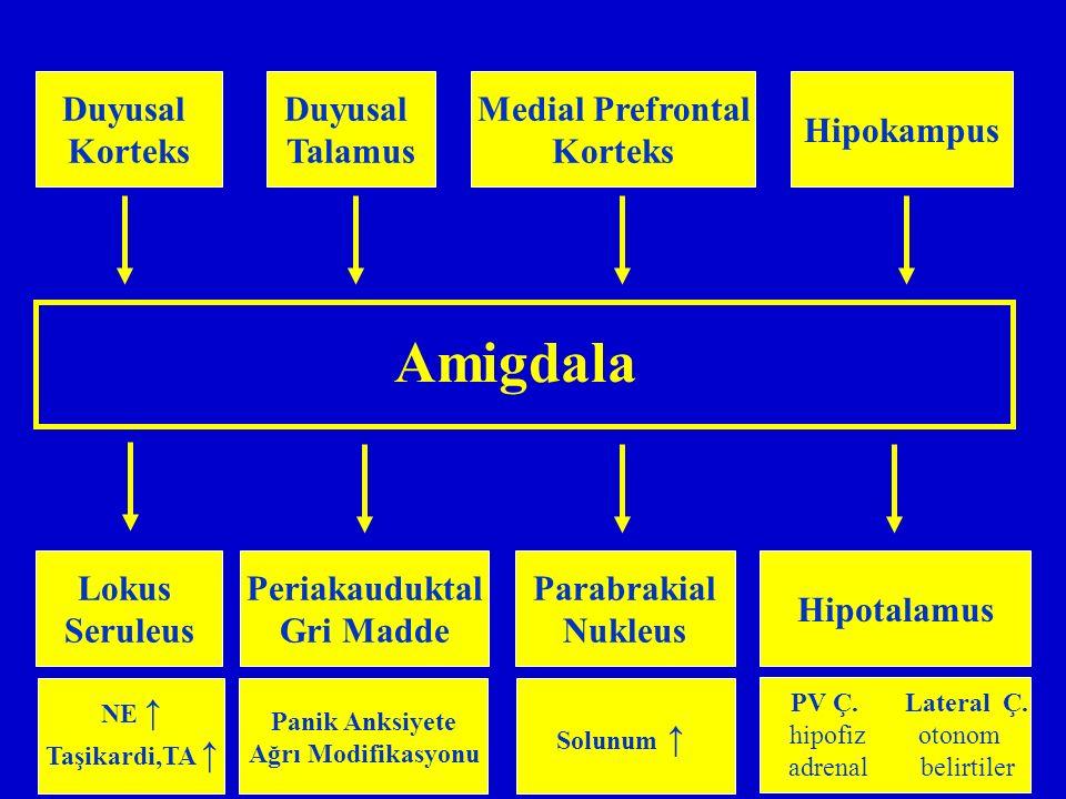 Amigdala Duyusal Korteks Duyusal Talamus Medial Prefrontal Korteks Hipokampus Lokus Seruleus Periakauduktal Gri Madde NE ↑ Taşikardi,TA ↑ Panik Anksiy