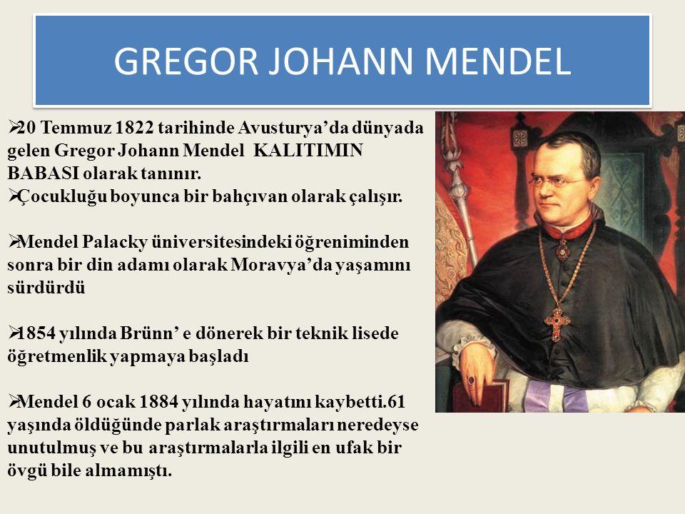GREGOR JOHANN MENDEL  20 Temmuz 1822 tarihinde Avusturya'da dünyada gelen Gregor Johann Mendel KALITIMIN BABASI olarak tanınır.  Çocukluğu boyunca b