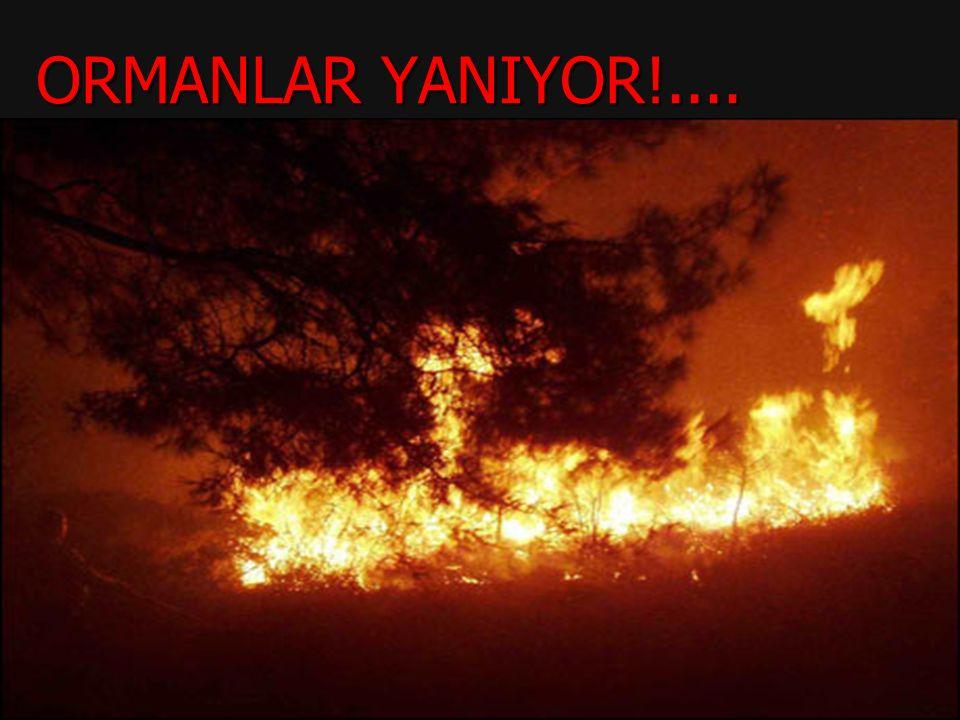 ORMANLAR YANIYOR!....