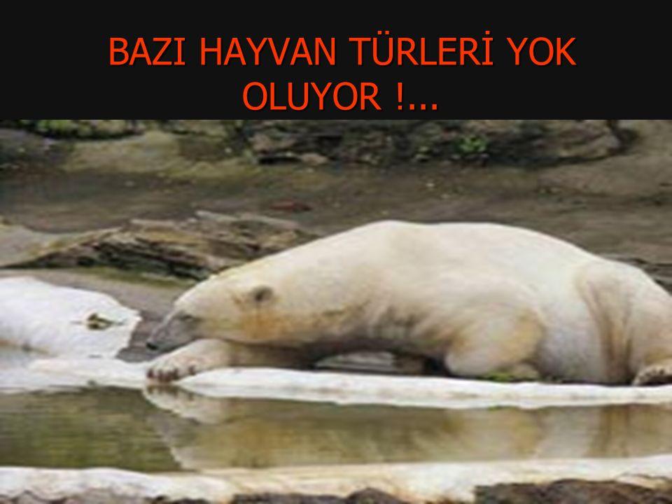 BAZI HAYVAN TÜRLERİ YOK OLUYOR !...