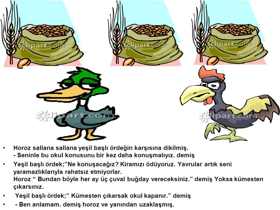 Horoz sallana sallana yeşil başlı ördeğin karşısına dikilmiş.