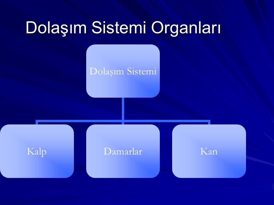 Dolaşım Sistemi Organları Dolaşım Sistemi KalpDamarlarKan