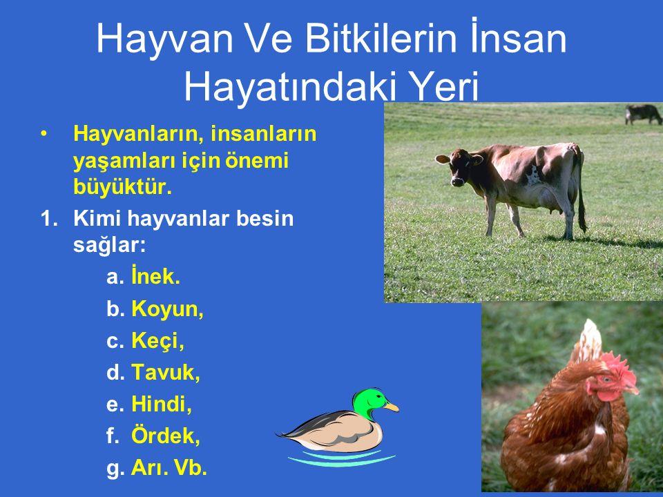 Hayvan Ve Bitkilerin İnsan Hayatındaki Yeri Hayvanların, insanların yaşamları için önemi büyüktür.