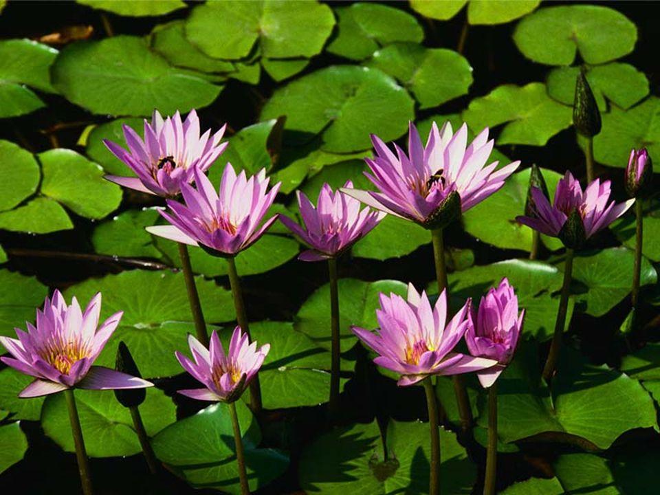 Çiçek Çiçek, bitkinin çoğalma organıdır.Tohum, çiçekte oluşur. Tohumun dışındaki etli kısım ise meyvedir. Elma, armut, erik, şeftali ve zeytin gibi bi