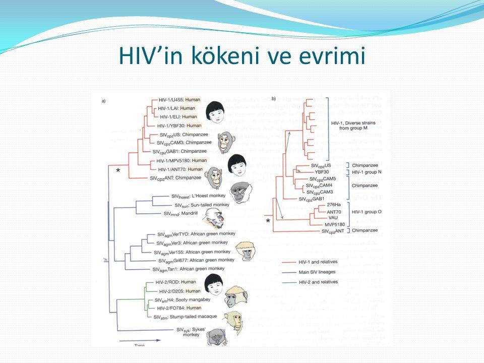HIV'in kökeni ve evrimi
