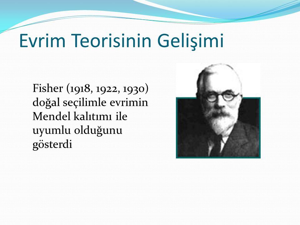 Evrim Teorisinin Gelişimi Fisher (1918, 1922, 1930) doğal seçilimle evrimin Mendel kalıtımı ile uyumlu olduğunu gösterdi