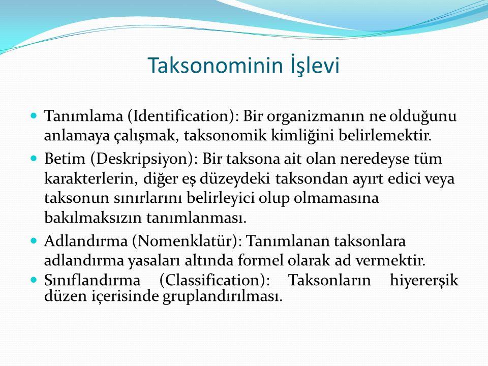 Taksonominin İşlevi Tanımlama (Identification): Bir organizmanın ne olduğunu anlamaya çalışmak, taksonomik kimliğini belirlemektir. Betim (Deskripsiyo