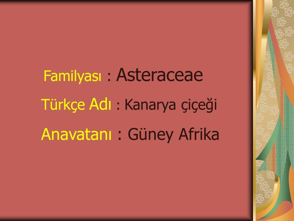 Familyası : Asteraceae Türkçe Adı : Kanarya çiçeği Anavatanı : Güney Afrika