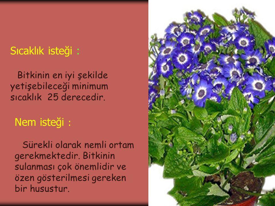 Sıcaklık isteği : Bitkinin en iyi şekilde yetişebileceği minimum sıcaklık 25 derecedir. Nem isteği : Sürekli olarak nemli ortam gerekmektedir. Bitkini