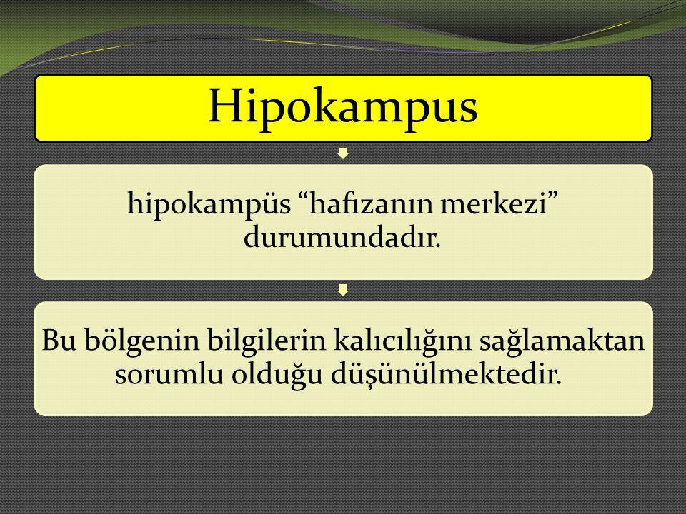 """Hipokampus hipokampüs """"hafızanın merkezi"""" durumundadır. Bu bölgenin bilgilerin kalıcılığını sağlamaktan sorumlu olduğu düşünülmektedir."""