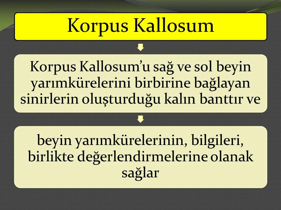 Korpus Kallosum Korpus Kallosum'u sağ ve sol beyin yarımkürelerini birbirine bağlayan sinirlerin oluşturduğu kalın banttır ve beyin yarımkürelerinin,