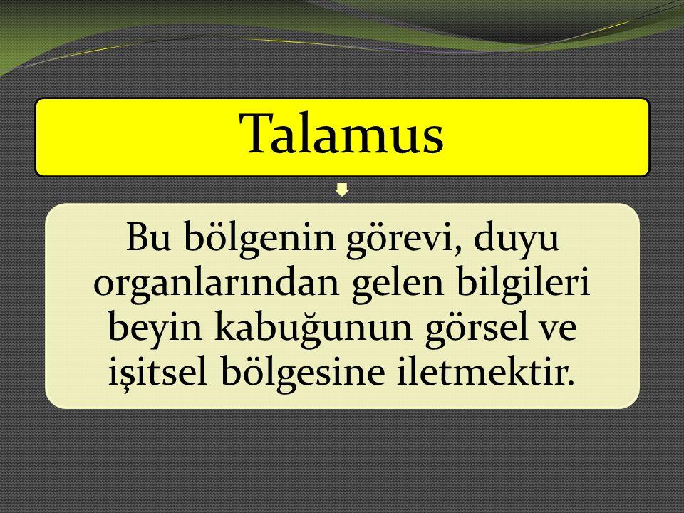 Talamus Bu bölgenin görevi, duyu organlarından gelen bilgileri beyin kabuğunun görsel ve işitsel bölgesine iletmektir.