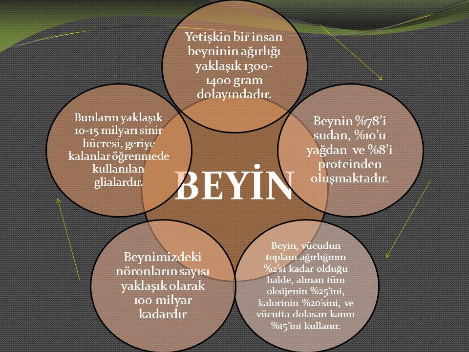 7- Öğrenme, hem odaklanmış dikkati hem de çevresel algıyı içerir.