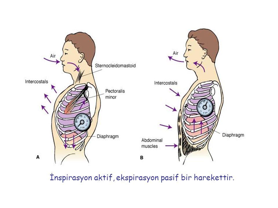 Maksimal akım- volüm halkası Ekspiratuar akım hızı, L/sn Volüm (L) FVC Maksimal ekspiratuar akım (PEF) İnspiratuar akım hızı, L/sn RV TAK Maximum inspirasyon eğrisi Maximum ekspirasyon eğrisi Spirometrik traseden elde edilir