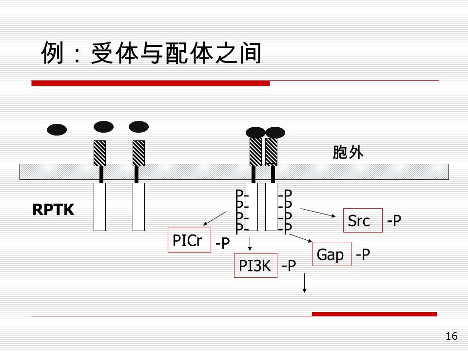 16 例:受体与配体之间 -P P- Src Gap PI3K PICr RPTK -P 胞外
