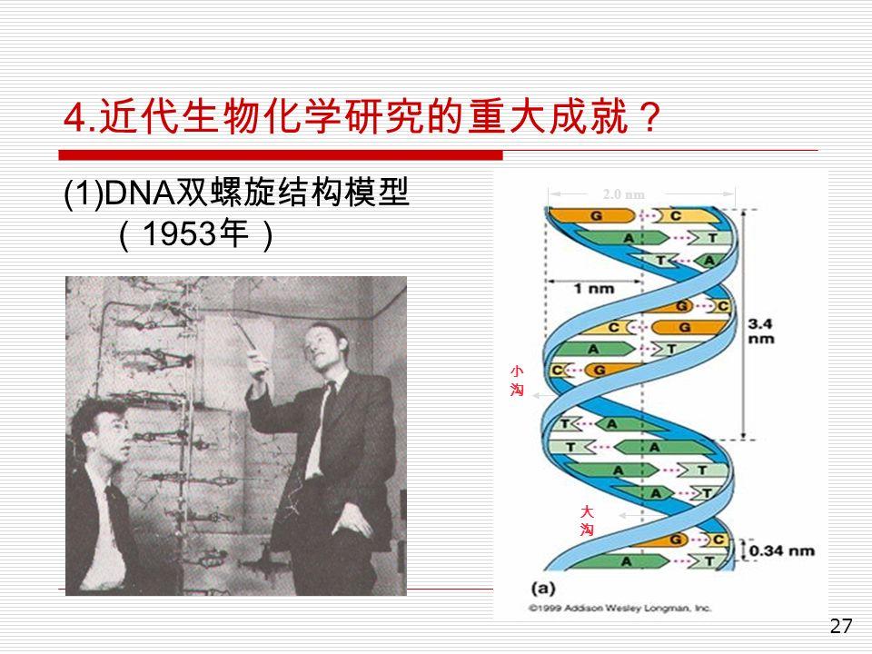 27 4. 近代生物化学研究的重大成就? (1)DNA 双螺旋结构模型 ( 1953 年) 2.0 nm 小沟小沟 大沟大沟