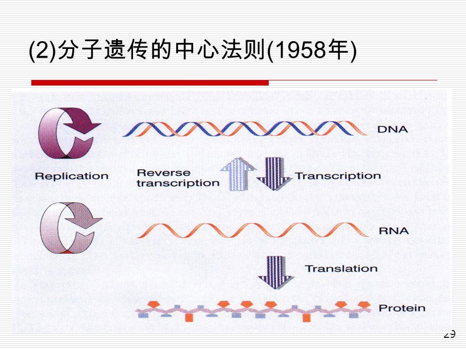 29 (2) 分子遗传的中心法则 (1958 年 )