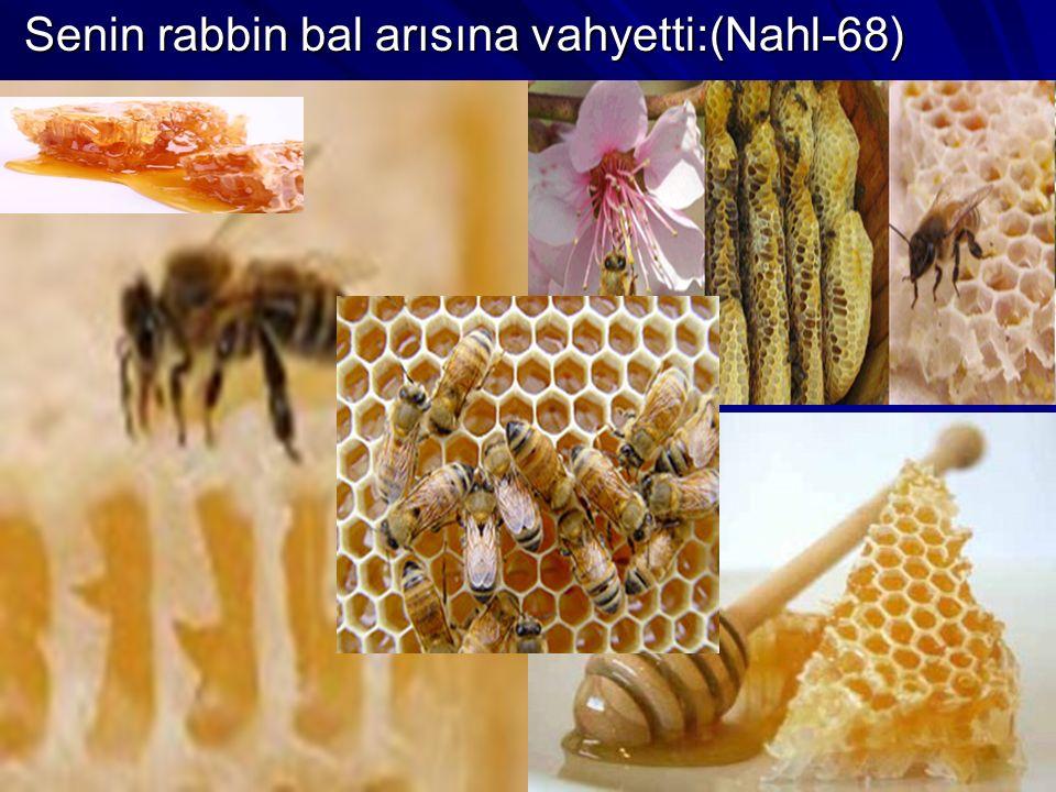 Senin rabbin bal arısına vahyetti:(Nahl-68) Senin rabbin bal arısına vahyetti:(Nahl-68)