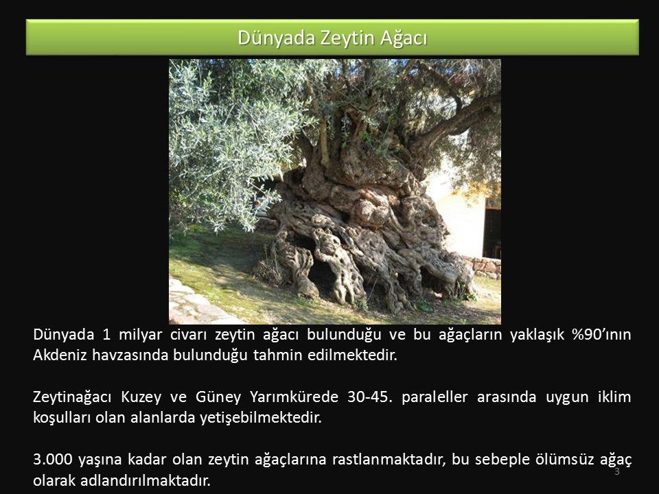 Dünyada 1 milyar civarı zeytin ağacı bulunduğu ve bu ağaçların yaklaşık %90'ının Akdeniz havzasında bulunduğu tahmin edilmektedir. Zeytinağacı Kuzey v