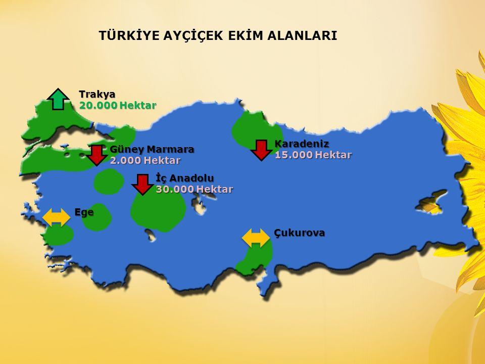2015 / 2016 sezonu Türkiye yağlık ayçiçeği üretiminin; Bir önceki yıla göre bir miktar azalış ile, 950 - 1.050 bin ton ( 2014 / 15, 1.200 bin ton) seviyelerinde gerçekleşmesi beklenmektedir.