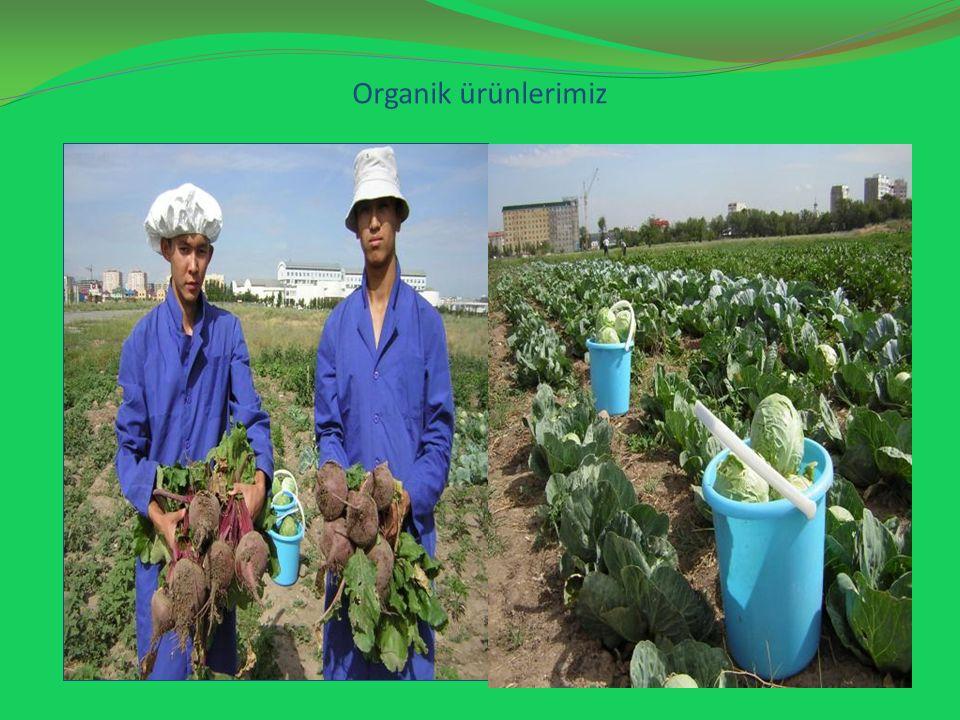 Organik ürünlerimiz