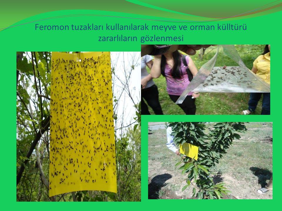 Feromon tuzakları kullanılarak meyve ve orman külltürü zararlıların gözlenmesi