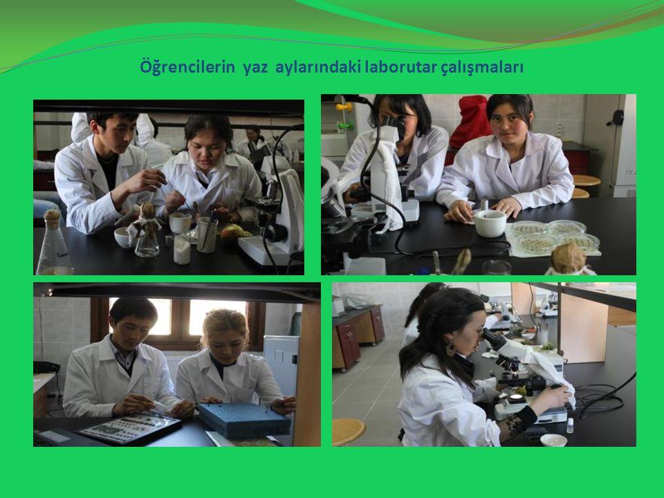 Öğrencilerin yaz aylarındaki laborutar çalışmaları