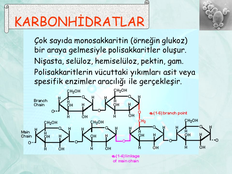 Çok sayıda monosakkaritin (örneğin glukoz) bir araya gelmesiyle polisakkaritler oluşur. Nişasta, selüloz, hemiselüloz, pektin, gam. Polisakkaritlerin