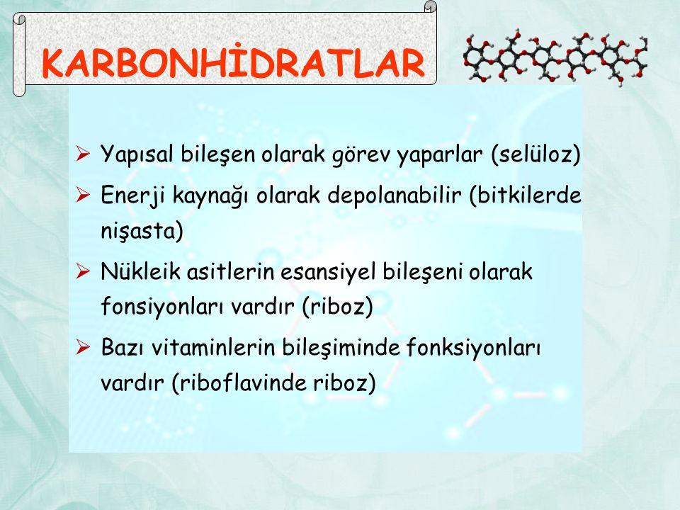 KARBONHİDRATLAR  Yapısal bileşen olarak görev yaparlar (selüloz)  Enerji kaynağı olarak depolanabilir (bitkilerde nişasta)  Nükleik asitlerin esansiyel bileşeni olarak fonsiyonları vardır (riboz)  Bazı vitaminlerin bileşiminde fonksiyonları vardır (riboflavinde riboz)