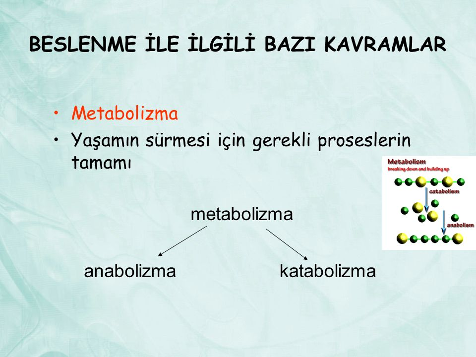BESLENME İLE İLGİLİ BAZI KAVRAMLAR Metabolizma Yaşamın sürmesi için gerekli proseslerin tamamı metabolizma anabolizmakatabolizma