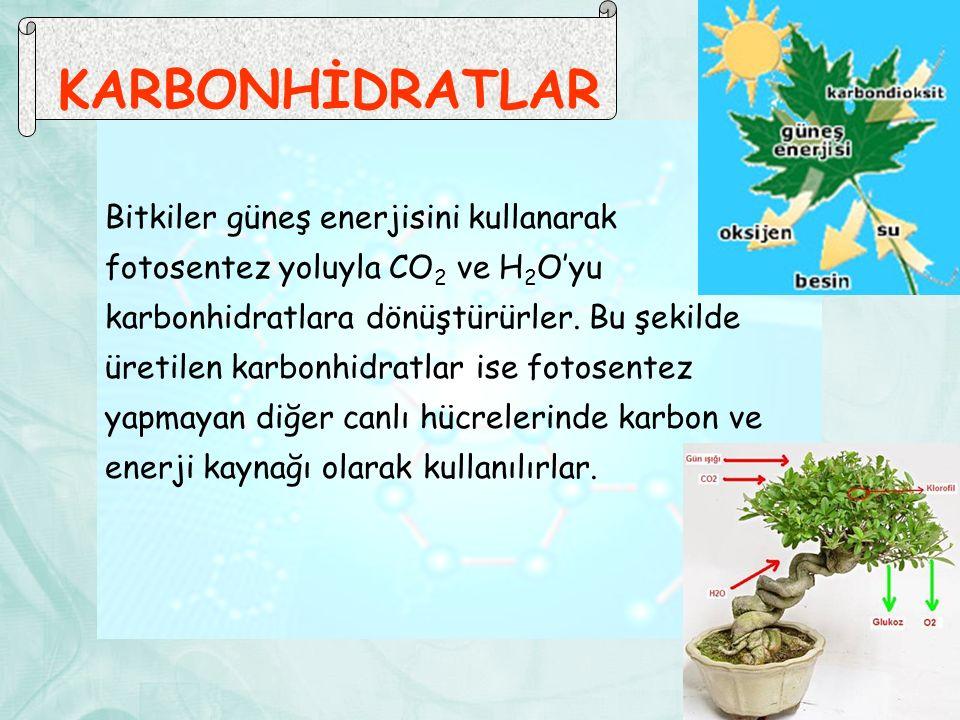 KARBONHİDRATLAR Bitkiler güneş enerjisini kullanarak fotosentez yoluyla CO 2 ve H 2 O'yu karbonhidratlara dönüştürürler. Bu şekilde üretilen karbonhid
