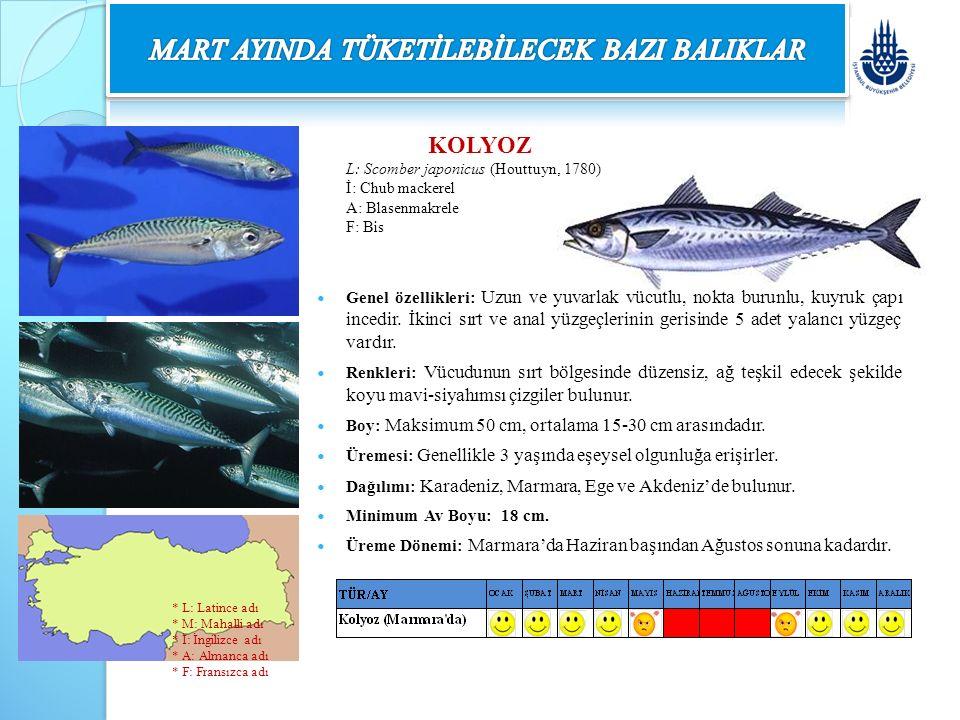 KOLYOZ L: Scomber japonicus (Houttuyn, 1780) İ: Chub mackerel A: Blasenmakrele F: Bis Genel özellikleri: Uzun ve yuvarlak vücutlu, nokta burunlu, kuyr