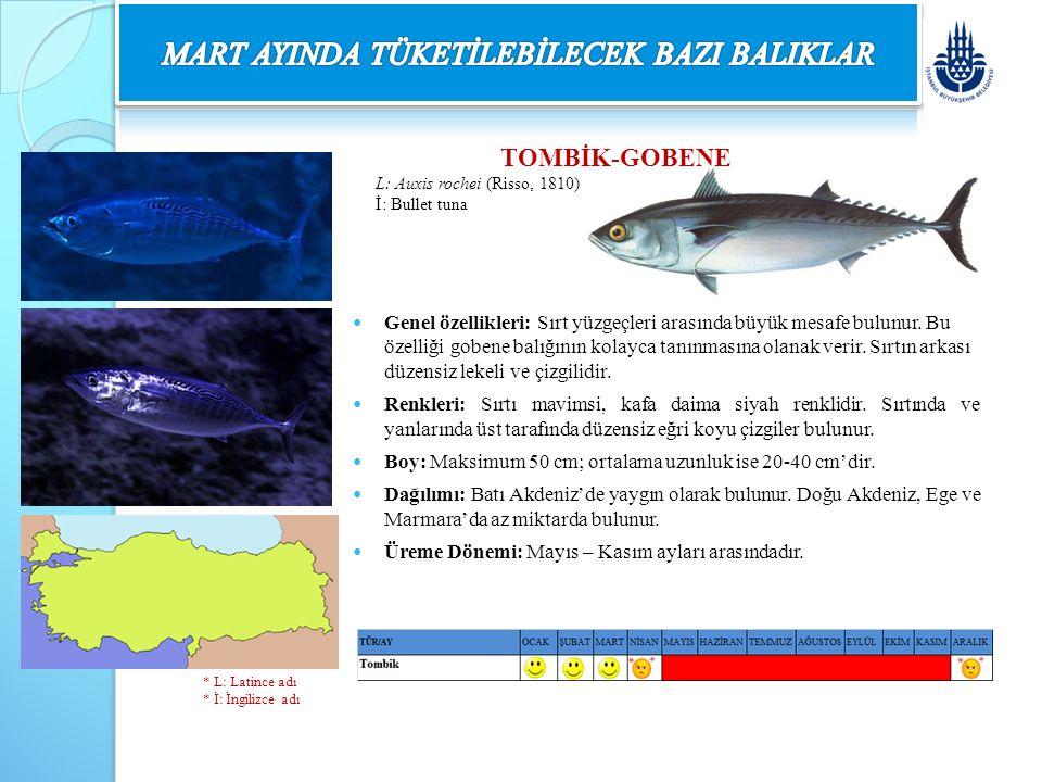 TOMBİK-GOBENE L: Auxis rochei (Risso, 1810) İ: Bullet tuna Genel özellikleri: Sırt yüzgeçleri arasında büyük mesafe bulunur. Bu özelliği gobene balığı