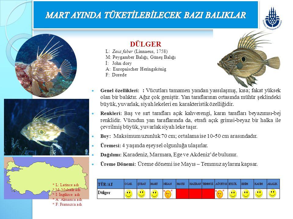 DÜLGER L: Zeus faber (Linnaeus, 1758) M: Peygamber Balığı, Güneş Balığı İ: John dory A: Europaischer Heringskönig F: Dorede Genel özellikleri: : Vücut