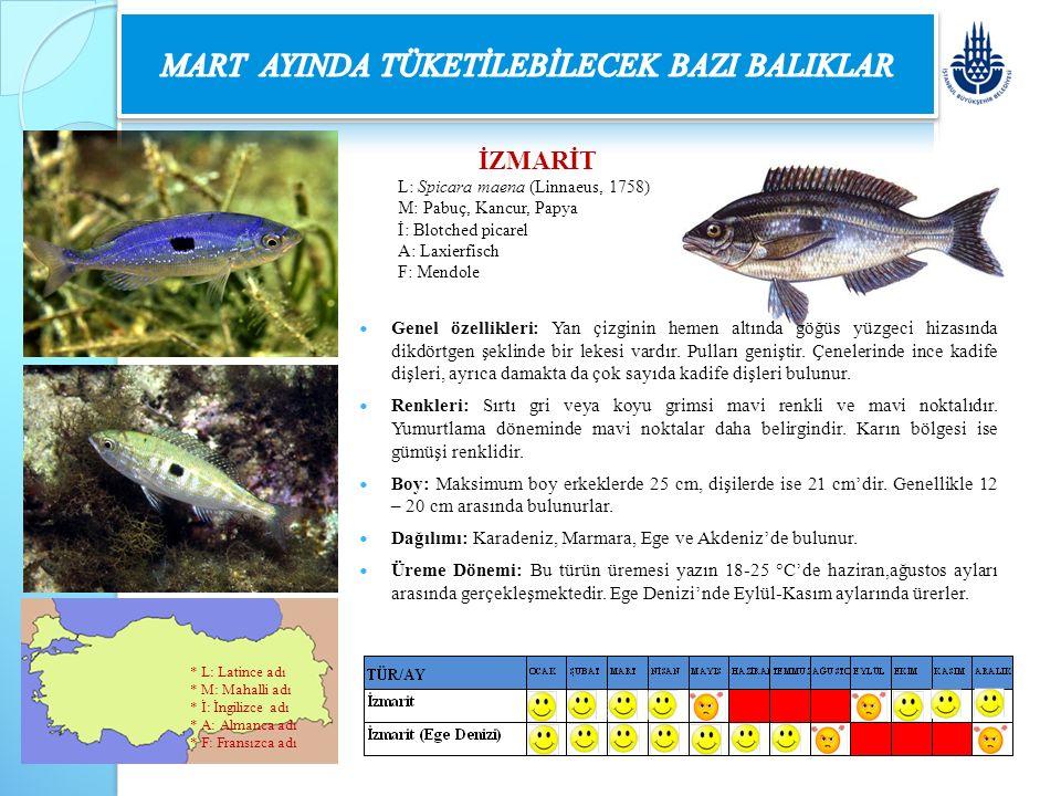 İZMARİT L: Spicara maena (Linnaeus, 1758) M: Pabuç, Kancur, Papya İ: Blotched picarel A: Laxierfisch F: Mendole Genel özellikleri: Yan çizginin hemen
