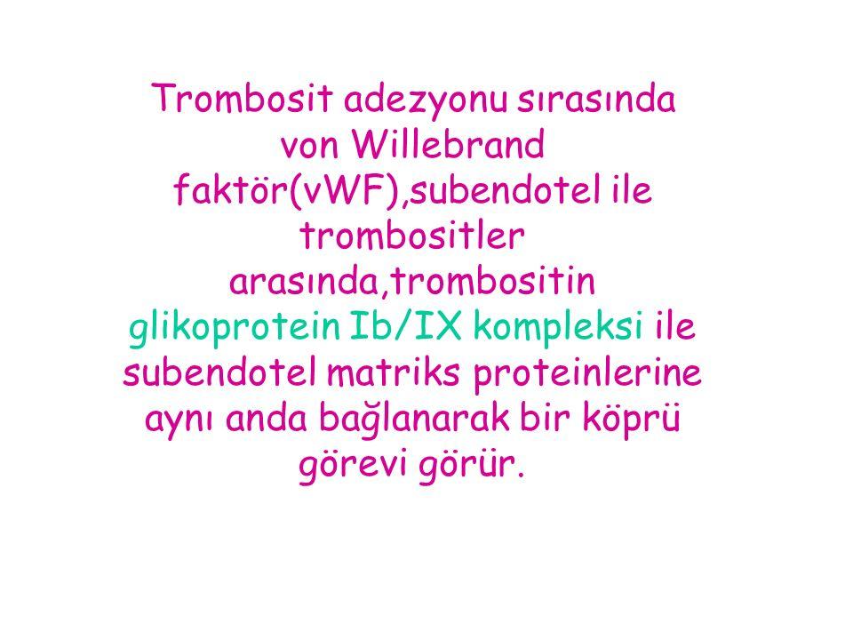 Trombosit adezyonu sırasında von Willebrand faktör(vWF),subendotel ile trombositler arasında,trombositin glikoprotein Ib/IX kompleksi ile subendotel m