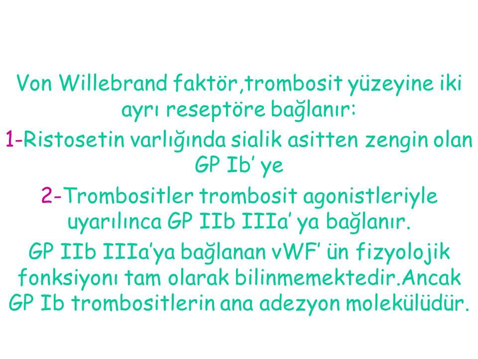Von Willebrand faktör,trombosit yüzeyine iki ayrı reseptöre bağlanır: 1-Ristosetin varlığında sialik asitten zengin olan GP Ib' ye 2-Trombositler trom