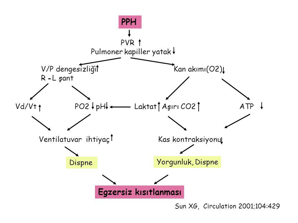 PPH PVR Pulmoner kapiller yatak V/P dengesizliği Kan akımı(O2) R L şant Vd/VtPO2 pHLaktat Aşırı CO2 ATP Ventilatuvar ihtiyaçKas kontraksiyonu Dispne E