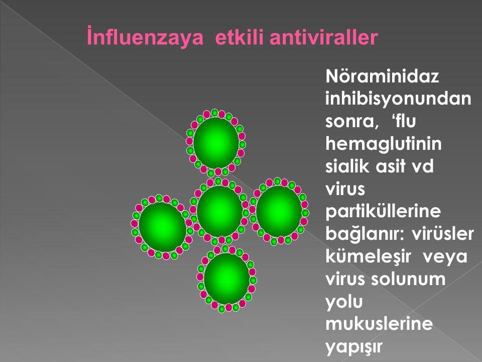 Nöraminidaz inhibisyonundan sonra, 'flu hemaglutinin sialik asit vd virus partiküllerine bağlanır: virüsler kümeleşir veya virus solunum yolu mukusler