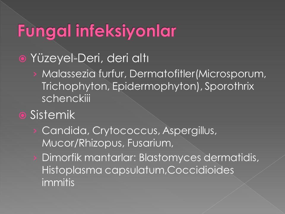  Yüzeyel-Deri, deri altı › Malassezia furfur, Dermatofitler(Microsporum, Trichophyton, Epidermophyton), Sporothrix schenckiii  Sistemik › Candida, C